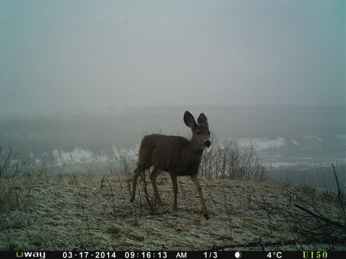 Little buck on a snowy day
