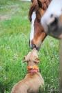 Kisses for Ranger Photo credit: Tyler Chamberlin