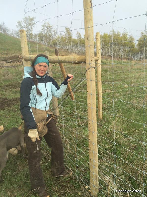 1-fencing 1